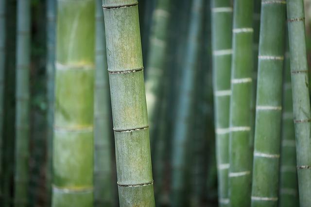 bamboo-3028709_640